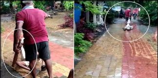 son hit father in valsad video viral on social media » Trishul News Gujarati Breaking News