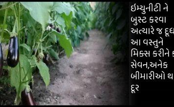 ri » Trishul News Gujarati Breaking News