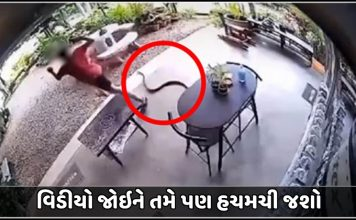 person runs at top speed after being startled by snake watch shocking video trishulnews » Trishul News Gujarati Breaking News