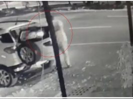 man has been caught on cctv stealing a bouquet of flowers in - Trishul News Gujarati Breaking News